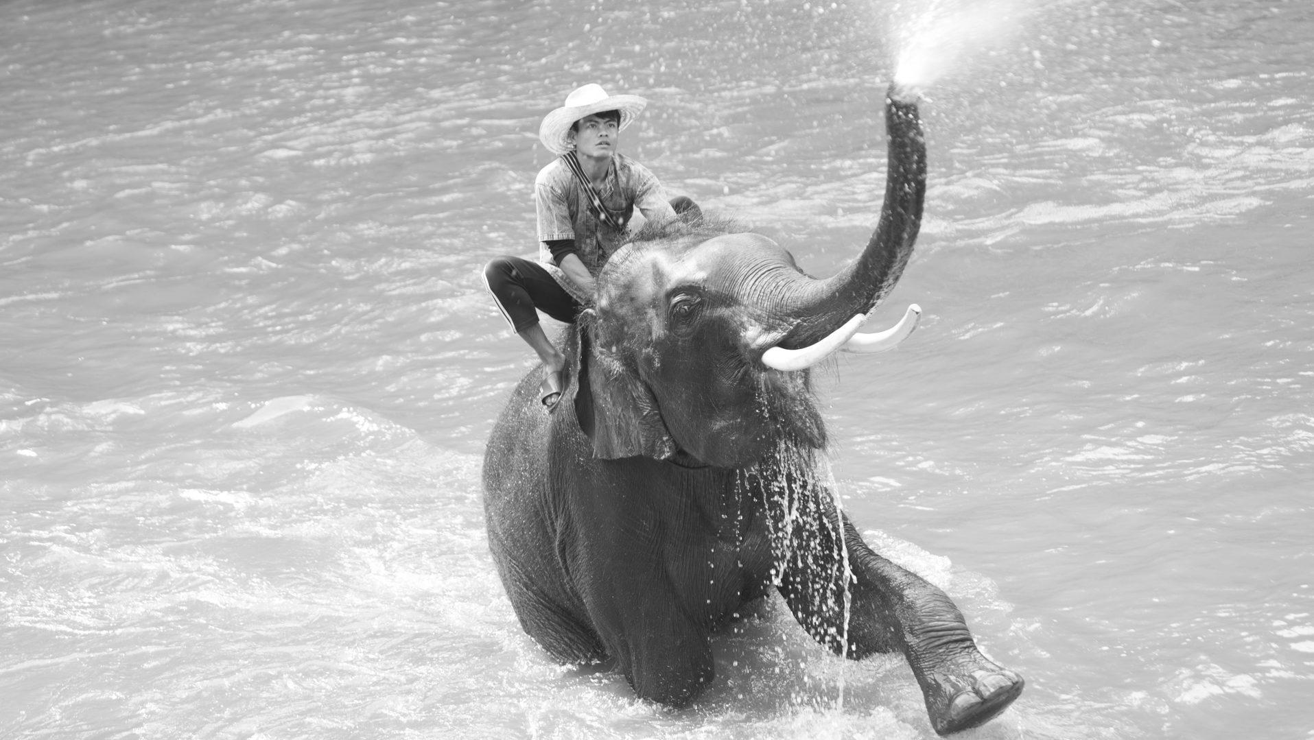Almudena Plaza-Thailand-elephant